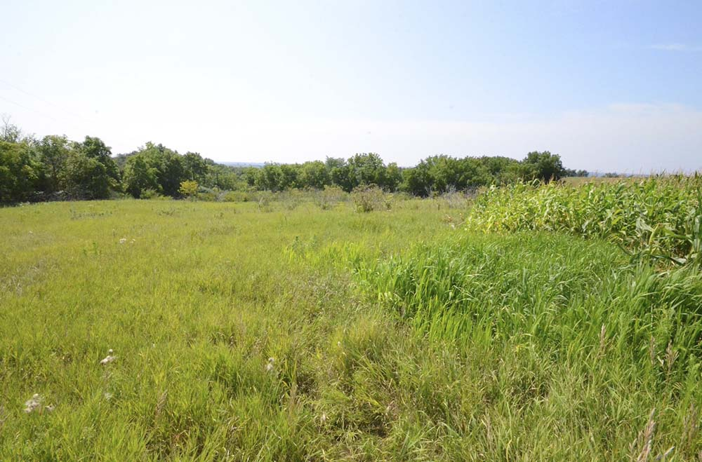 35 Acres for Sale | Allamakee County, Iowa