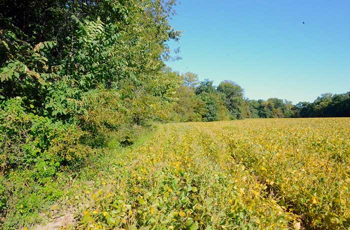 60 Acres of Timber and Hunting Land in Tama County, Iowa