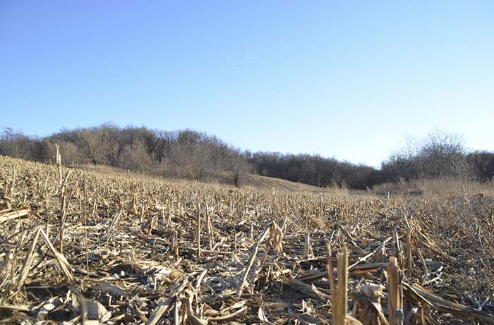 Farm Land and Hunting Land for Sale | 97 Acres Tama County, Iowa