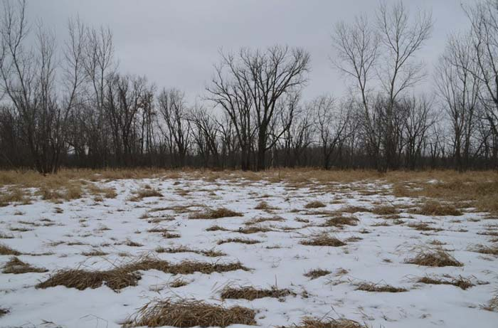 Iowa Hunting Land for Sale | 270 Acres Tama County