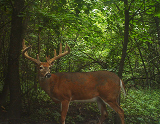 $336,000 | 96 Acres Fayette County