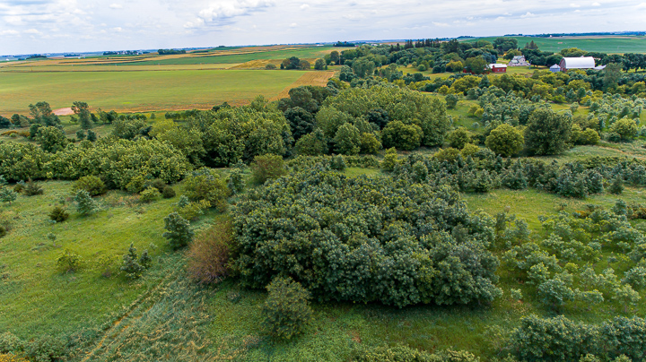 40 Acres Butler County | Iowa Hunting Land for Sale