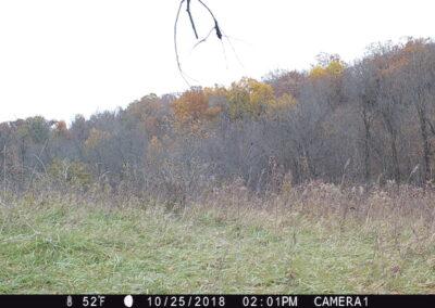 106 acres m/l Tama County | Iowa Farmland For Sale | Huff Land Company
