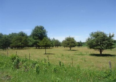 Acreage Building Lot For Sale | W. Cedar Wapsi Rd. | Huff Land Co.