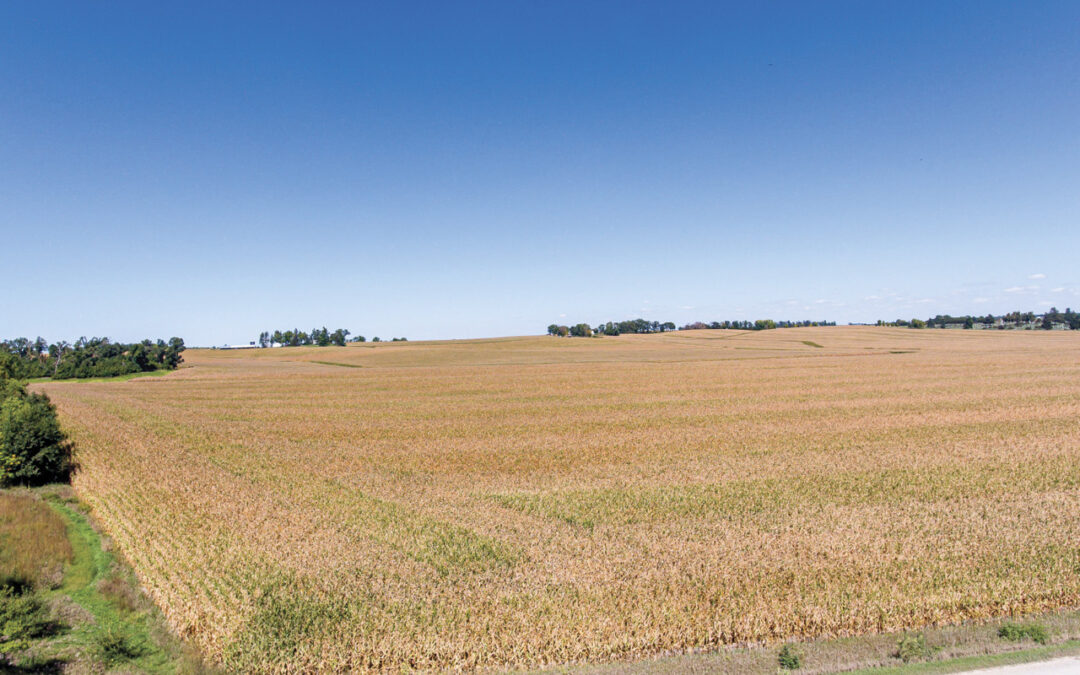 Land Auction | 150 Acres for Sale in Traer, Iowa